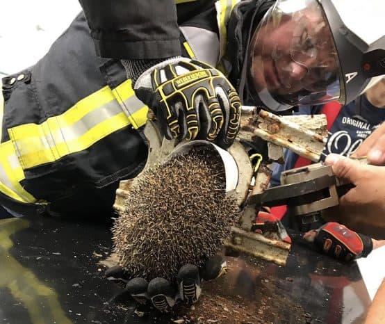 Tierische Woche: Feuerwehr rettet Eule, Schildkröte und Igel
